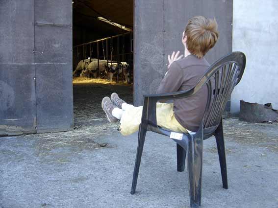 le petit prince et les vaches