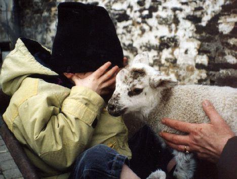 Lou et le mouton