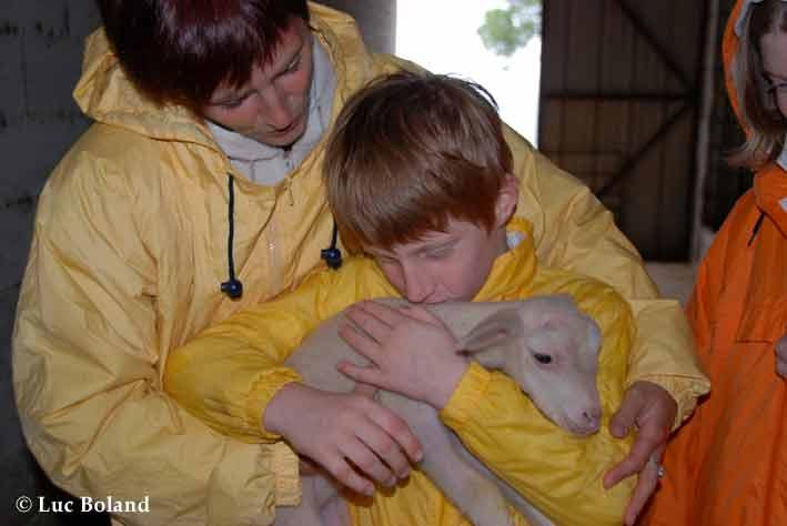 le petit prince et le mouton